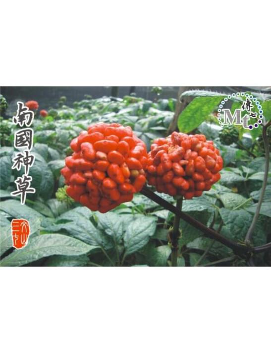 傳七文山三七花(250g)