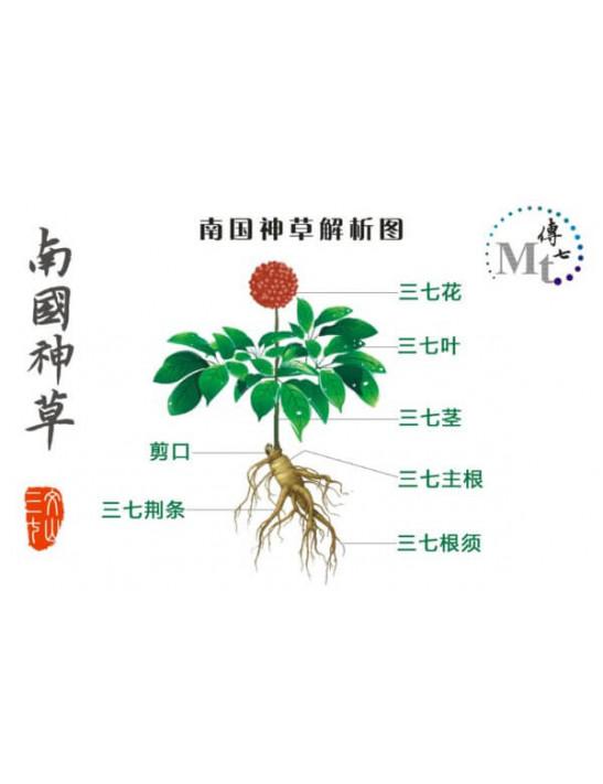 傳七文山三七粉 (30包)